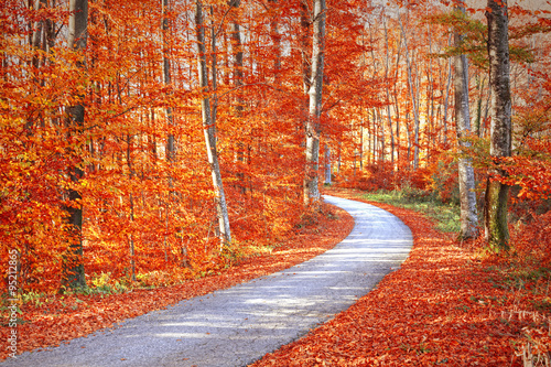 red-and-gold-color-saturated-sunny-autumn-season-forest-with-beautiful-winding-asphalt-road-magical-oversaturated-autumn-forest-tree-leaves