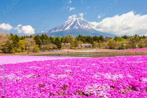 Mountain Fuji and pink moss field in spring season