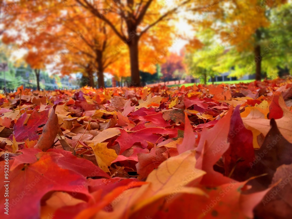 Fototapety, obrazy: autumn leaves