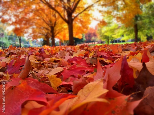 Fotografie, Obraz  autumn leaves