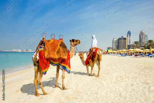 Poster Dubai Dubai, camels on the beach of the Oasis resort in the new Marina quarter