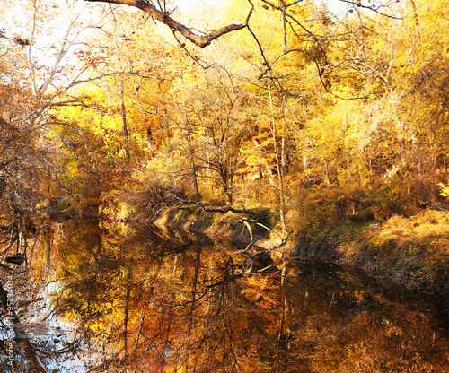 Fototapety, obrazy: Autumn forest with river. Park in fall