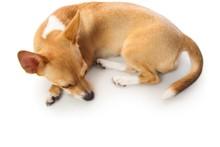 Cute Dog Lying Down