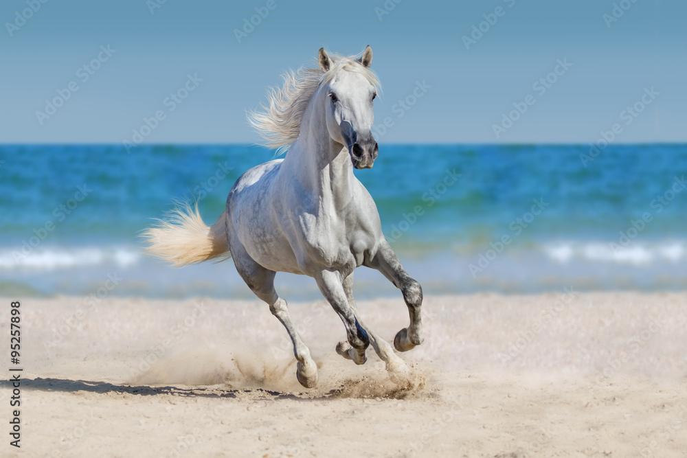 Horse run against the ocean Poster