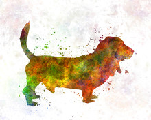 Basset Hound In Watercolor
