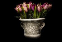 Tulipani Fiori Vaso Colorati
