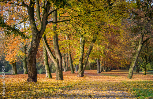Foto op Canvas Herfst Beautiful Colorful Autumn Leaves / green, yellow, orange, red
