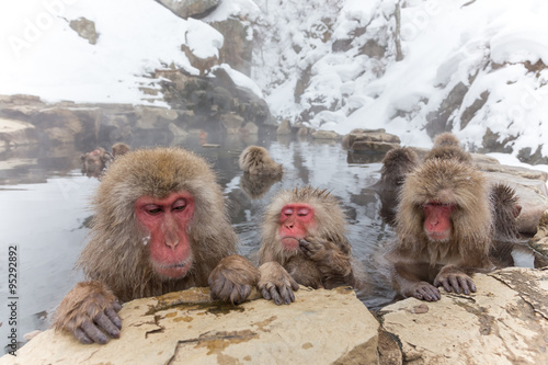 Foto op Plexiglas Aap 露天風呂のおさるさん Japanese monkey of the hot spring