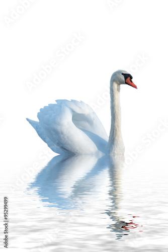 Poster Blanc White swan.