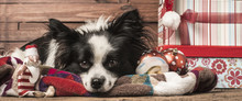 Dogs Christmas Greeting Templates