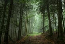 Chemin Montant Dans La Foret
