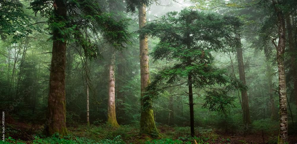 Fototapety, obrazy: Magiczny las