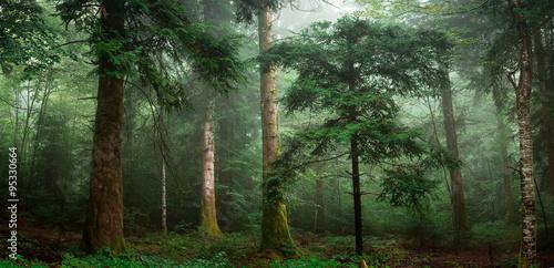Fotobehang Bossen petit sapin dans un sous bois