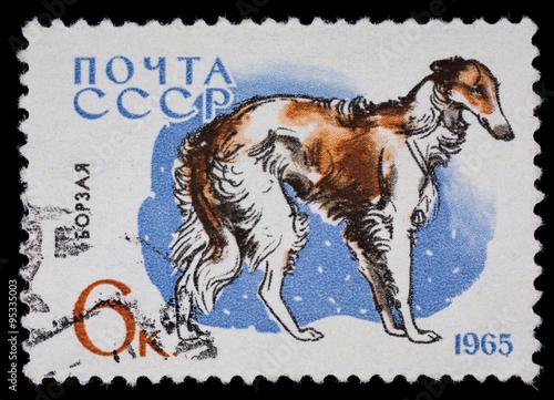 "Fotografía  USSR - CIRCA 1965: Postage stamp ""Greyhound"" (breeds of dogs)"