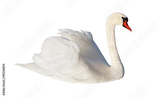 Deurstickers Zwaan Fluffy white swan.