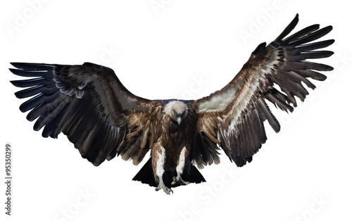 Poster Aigle Flying vulture. Isolated over white
