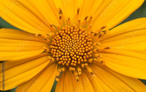 fototapeta na drzwi i meble Macro Flower