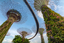 Supertrees At Gardens By The B...