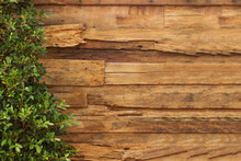 Wall Wood Texture And Plants