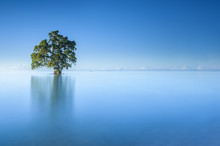 A Single Lonely Tree In A Blue Sky Morning In The Lahad Datu Beach, Sabah Borneo Malaysia