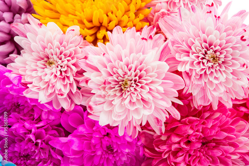 Sweet color chrysanthemums  for the soft background. Poster Mural XXL