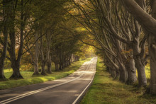 Beautiful Vibrant Road In Autumn Fall Landscape Forest Countrysi
