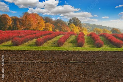 Jesienny krajobraz nad polskimi polami i lasami - 95385402