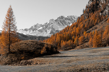 FototapetaAutumn colors at the Devero Alp with snowy mountains in background, Italy