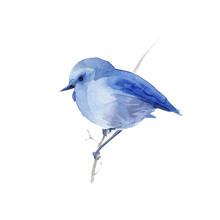 Watercolor Blue  Bird.