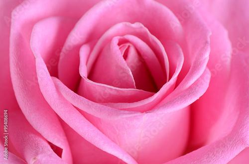 rozowa-roza-jako-tlo