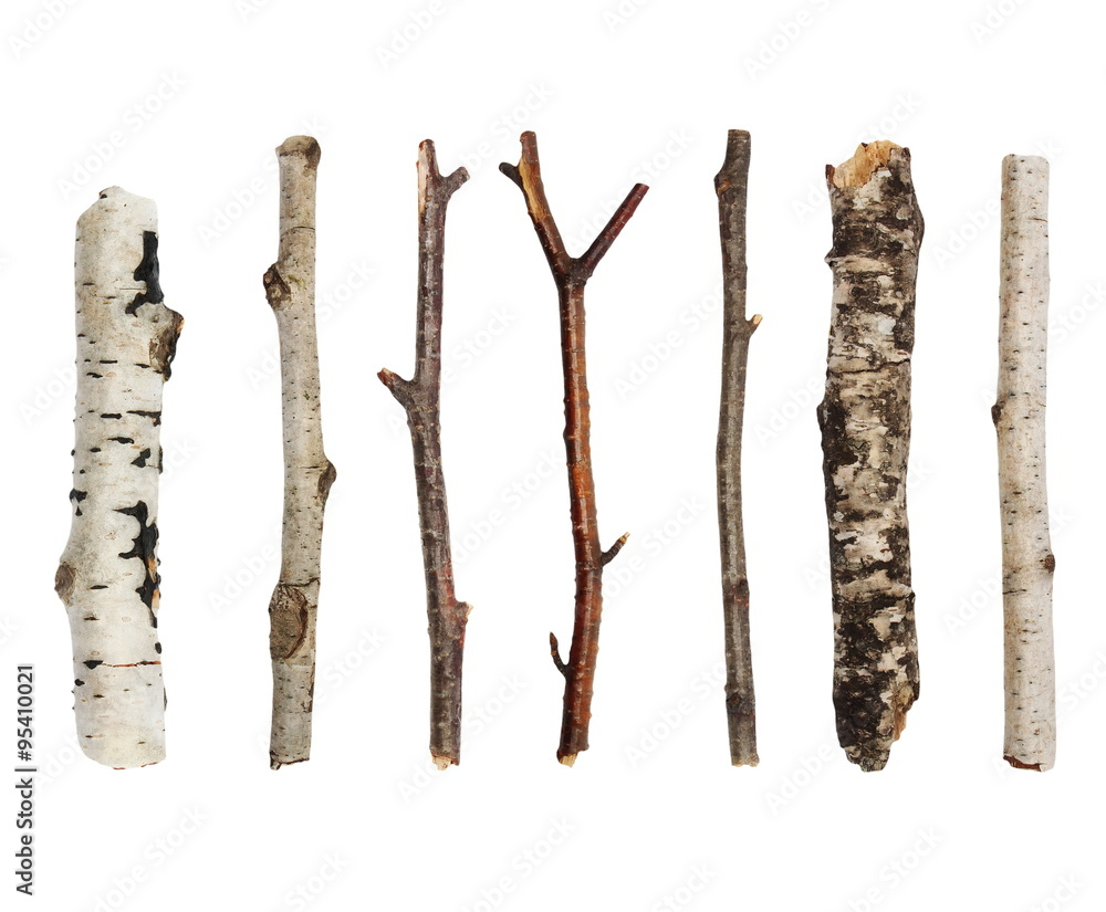 Twigs, set macro dry branches birch isolated on white background,  with clipping path