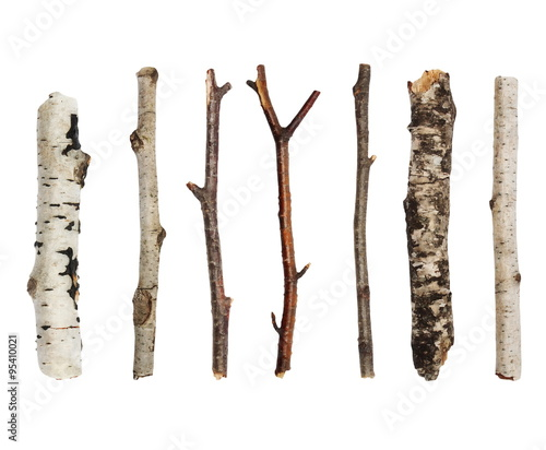 Fototapeta Twigs, set macro dry branches birch isolated on white background,  with clipping path obraz