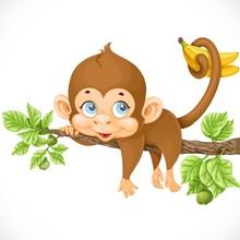 Cute Monkey Lazily Lying On A ...