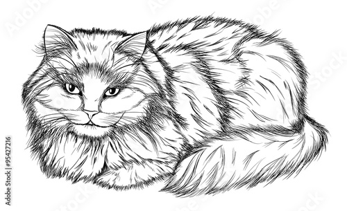 Poster Croquis dessinés à la main des animaux lying cat, black and white pencil drawing
