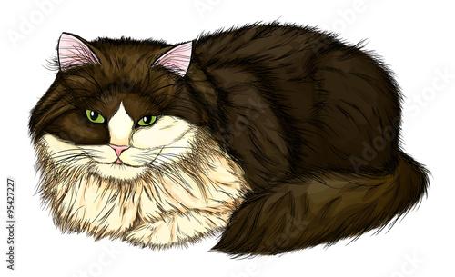 Foto op Canvas Hand getrokken schets van dieren beautiful, large and fluffy cat.