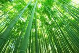 Fototapeta Bambus - 日本の風景・竹林・京都