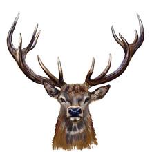 Deer Head Digital Painting/ De...