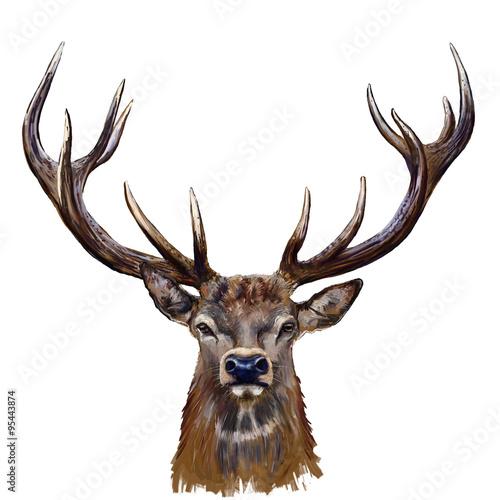 deer head digital painting/ deer head in front Wall mural