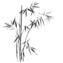 Bamboo Branches Outlined In Bl...