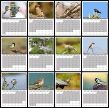 Garden Birds Calendar Year 2016