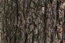 Old Textured Tree Bark