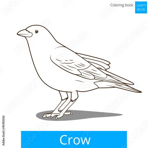 Crow learn birds coloring book vector – kaufen Sie diese ...