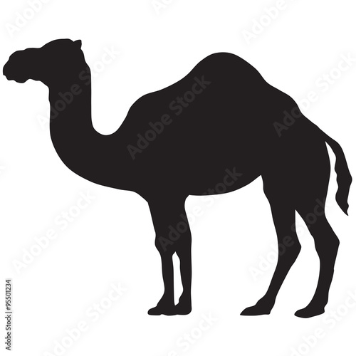 Canvas camel silhouette-vector