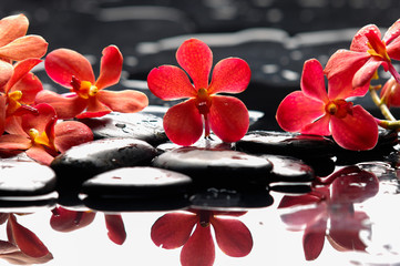 Obraz na Plexi Florystyczny Beautiful red orchid with therapy stones