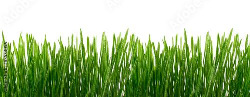 zielona-trawa-z-kropli-wody-izolowany-na-bialym-tle