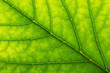 Abstract green leaf texture for background