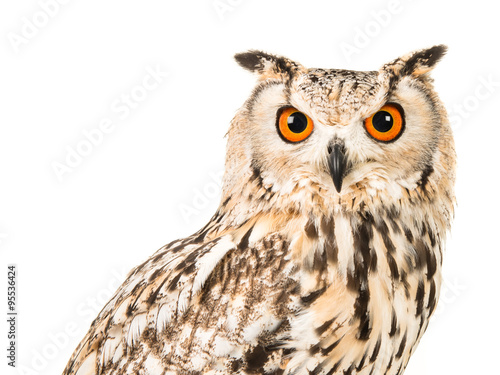 Keuken foto achterwand Uil Eagle owl facing the camera isolated on a white background
