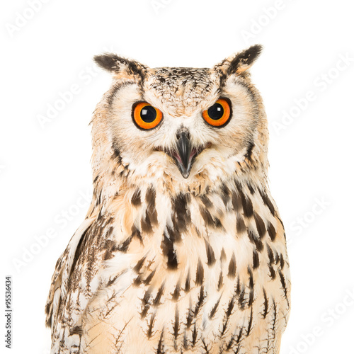 Staande foto Uil Eagle owl portrait facing the camera isolated on a white background