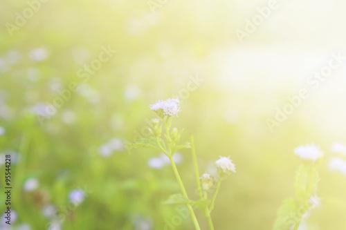 Fototapety, obrazy: Flower background, morning tone
