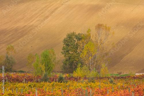 Fotografia  Viticoltura in Umbria